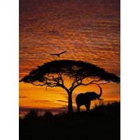 Komar National Geographic 4-501 Duvar Posteri