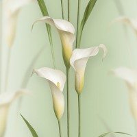 Casa Bene (3) 2572-3 3D Çiçek Desenli Duvar Kağıdı
